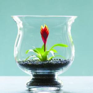glass-cactus-l